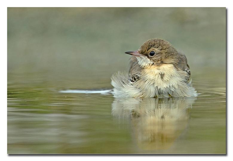 Heerlijk verfrissend! - met deze temperaturen van het moment ( ongeveer 30 graden ) is een fris badje helemaal zo gek nog niet!<br /> <br /> Effies