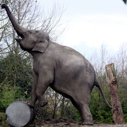 Blijdorp heeft een circus Olifant.