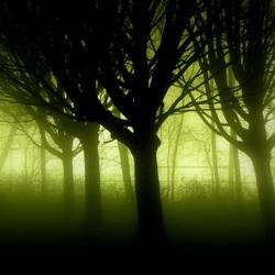 Mysterieuze bomen