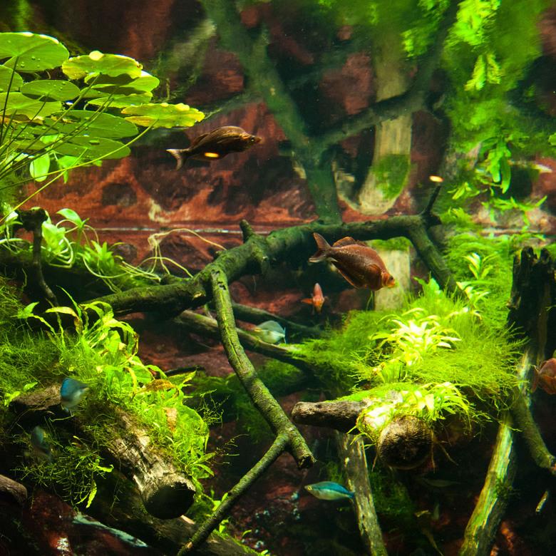Underwater - Foto gemaakt bij de aquarium in Artis