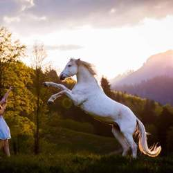 Horse Zwitserlands