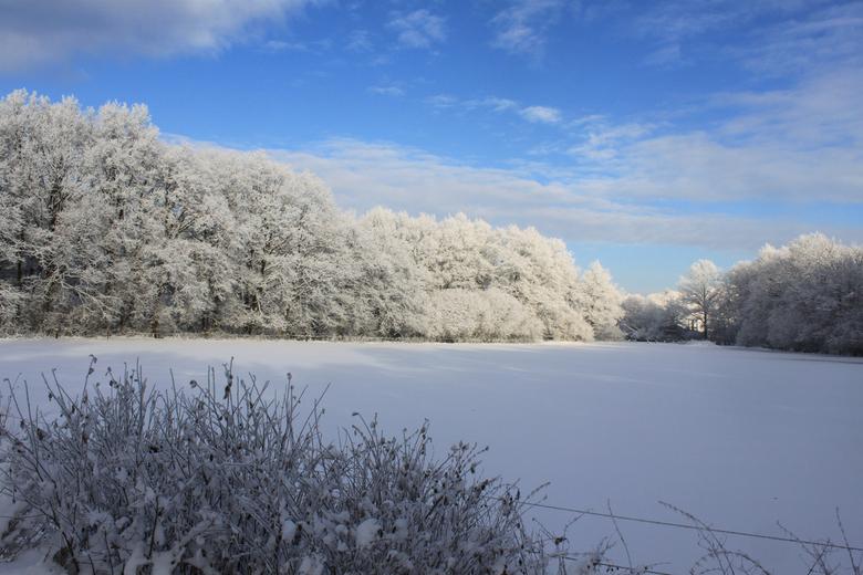Wintermorning -