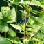 Prachtige blauwe libelle
