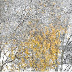 Een winters sfeertje