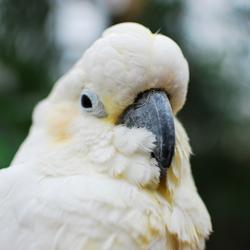 Close up - Papegaai