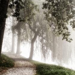 Stilte in het park