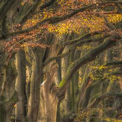 door het bos de bomen niet meer zien.........