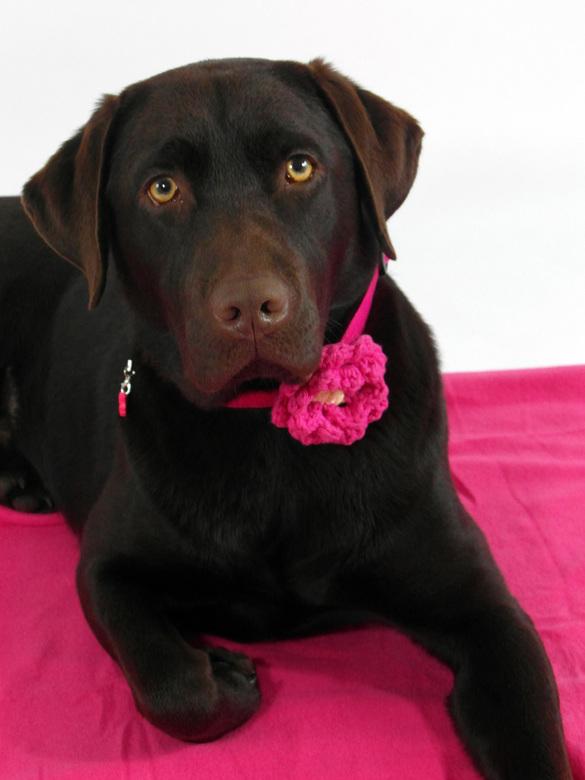 Pretty in pink! - Puk is eigenlijk echt een tomboy; Ze houdt van lekker buiten spelen en trainen in de natuur. Voor haar eerste verjaardag heeft ze to