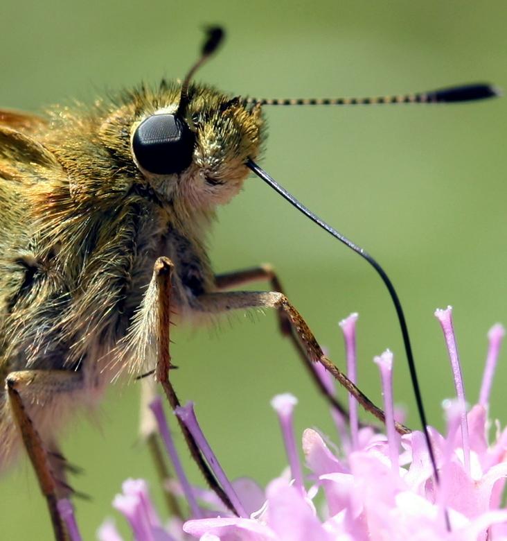 Italiaanse vlinder - Zomaar onderweg zat die er.....
