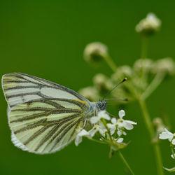 Passie voor vlinders