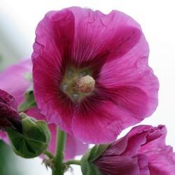 gewoon een bloem in de natuur
