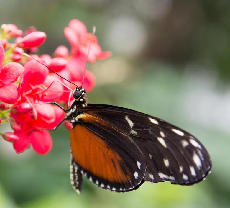 Dream of butterflies instead -