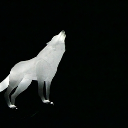 Amsterdam Light - wolf