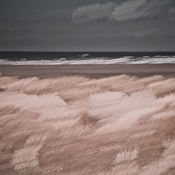 Duinen in Zeebrugge