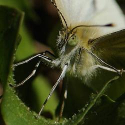 Vlinder van dichtbij