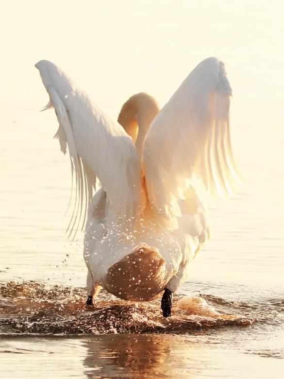 Gouden engelenvleugels  - Engelenvleugels tijdens de ondergaande zon.