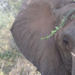 The eye of an elephant in Tanzania