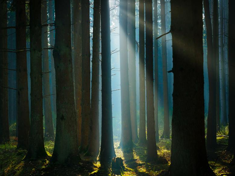 Mooi licht in een bos in de Eifel - Mysterieuze zonnestralen in het bos