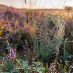 Spinnenweb in ochtendgloren