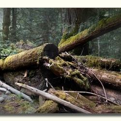 Mist opkomst op Vancouver Islands