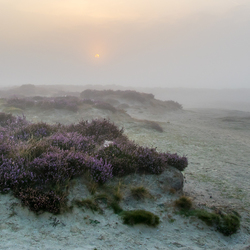 De zon breekt door de mist