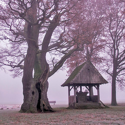 Kroezenboom met Kapelletje