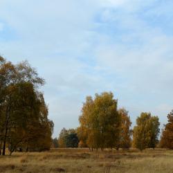 Venlose Heide...