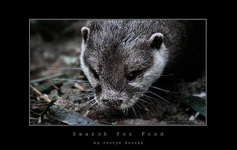 Search for Food - Deze otter was druk zoekende naar eten, tevens had hij zichtbaar gigantisch jeuk, want hij rolde eerst 10 minuten over de boomstronk