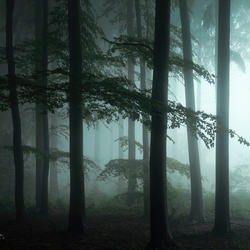 The Forest Awakens.