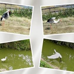 collage Westlandse  Polders  juni en aug 2018