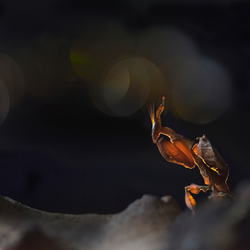 Little mantis 2
