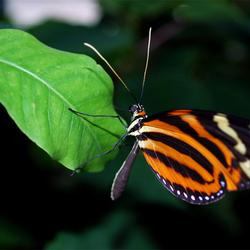 Leafhanger