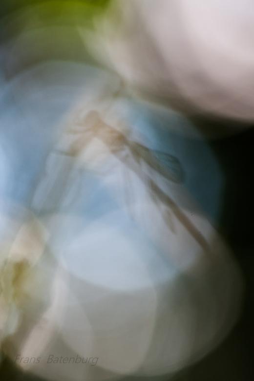In a bubble - Het resultaat van een uurtje wat dingen uit proberen met tegen licht.