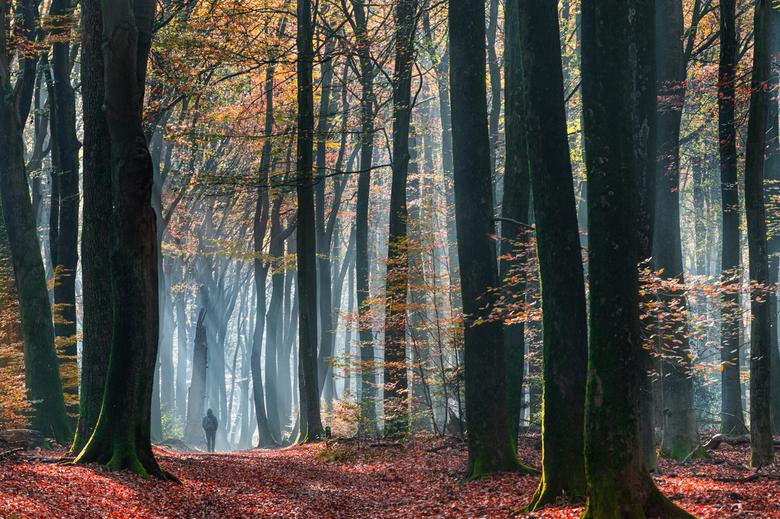 Het grote bos - Wat is het Speulderbos toch een magisch, groot, mysterieus bos
