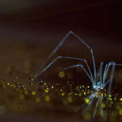 sparkling spider