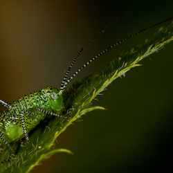 Little Green Jumper...