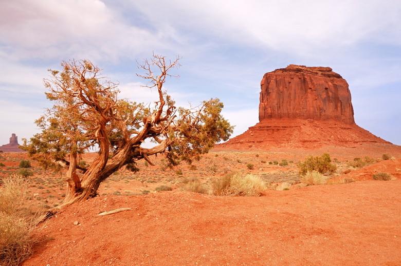 Monument Valley - Ik vond dit kwestbare droge boompje een mooi contrast met de massieve rode rotsen in Monument Valley.