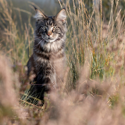 Wilde kat Grimmdal