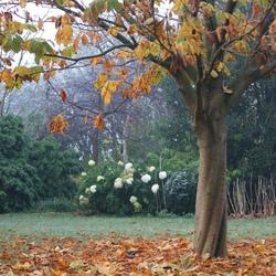 herfstbloei