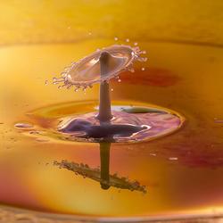 drops, milk and oil.