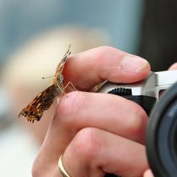 Vlinder op fotograaf