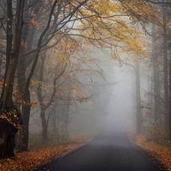 Autumn's Last Breath.
