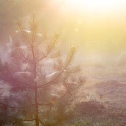 zonsopkomst Planken Wambuis