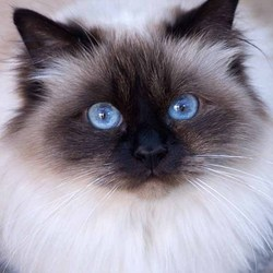 Classy blue eyed lady