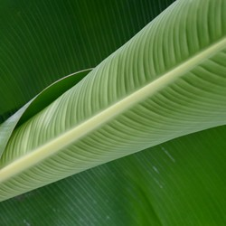 Groen blaadje
