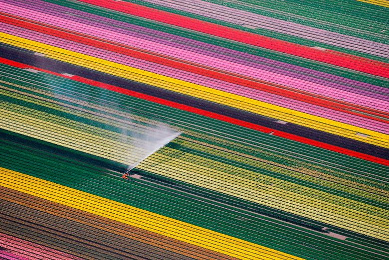 Lijnenspel in een Hollands tafereel - Besproeien van de tulpenvelden, Flevoland
