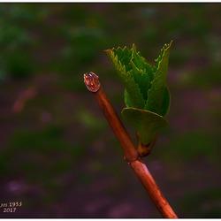 Nieuw leven in de natuur