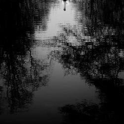 Eenzame zwaan