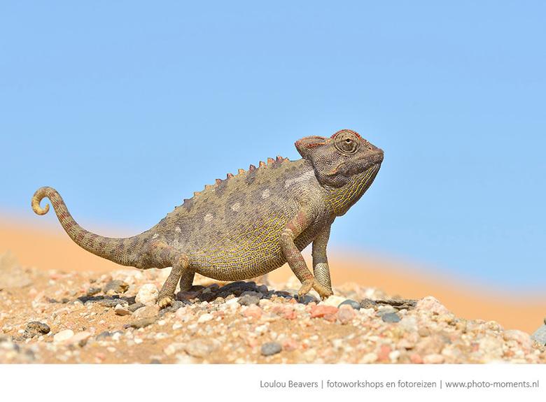 Karma karma karma chameleon