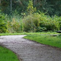 Follow the path!